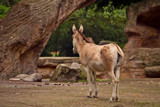 It Is Monday by Ramad, photography->animals gallery