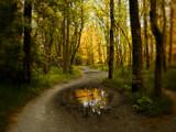Le miroir d'Or by jojomercury, Photography->Landscape gallery