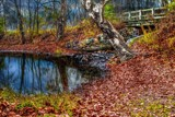 Late Autumn_Remake by tigger3, photography->manipulation gallery