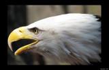 Talons XX by Hottrockin, Photography->Birds gallery