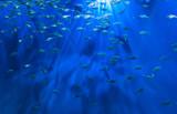 Blue Aquarium by Pistos, photography->underwater gallery