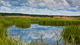Wetland areas by SEFA, photography->landscape gallery