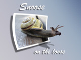 Snoose on the loose by Junglegeorge, Photography->Manipulation gallery