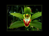 Green Orchid by LynEve, Photography->Flowers gallery