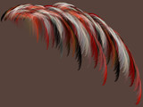 Plumes by Joanie, Abstract->Fractal gallery