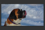 A Picture Is Worth A Thousand Licks by tigger3, Photography->Animals gallery