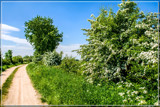 Hawthorn Ride by corngrowth, photography->landscape gallery