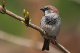 Introducing Jack Sparrow by Paul_Gerritsen, Photography->Birds gallery