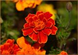 Garden De_light Vivid Colors by tigger3, photography->flowers gallery
