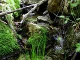 Hidden Stream by zharazi, Photography->Nature gallery