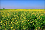 Who's Afraid Of Green, Yellow And Blue? by corngrowth, photography->landscape gallery