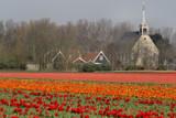 Flower fields by Paul_Gerritsen, Photography->Landscape gallery