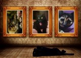 Cat Fancier by mesmerized, photography->manipulation gallery