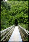 Bridge to the Bamboo Forest by ThisIsMOC, Photography->Bridges gallery