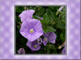 Purple Hues #4 by LynEve, Photography->Flowers gallery