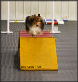 Dog Agility Trial Photo Opt by tigger3, photography->action or motion gallery