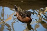 Desert Ducks (1) by Pistos, photography->birds gallery