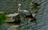 paradisio 42 by gaeljet2, Photography->Birds gallery