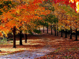 We will Walk the Path Again! by marilynjane, Photography->Landscape gallery