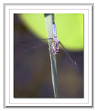 Ready...Set... by karrid, photography->insects/spiders gallery