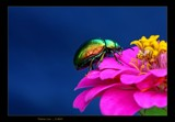 Rainbow love by kodo34, photography->insects/spiders gallery