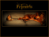 Friends by June, photography->pets gallery
