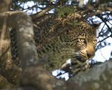 Eyes by garrettparkinson, photography->animals gallery