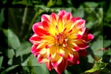 Summer Dahlia by LynEve, Photography->Flowers gallery