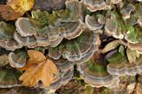 Mushrooms by Paul_Gerritsen, Photography->Mushrooms gallery