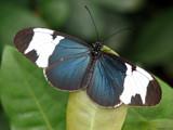 Paint the Sky II by Hottrockin, Photography->Butterflies gallery
