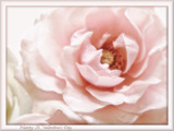 Happy St. Valentine's Day by cynlee, photography->flowers gallery