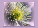 Clemmie's Heart by LynEve, photography->flowers gallery