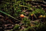 Hunting for Shrooms by Eubeen, photography->mushrooms gallery