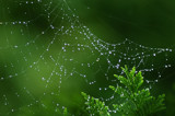Drops of Jupiter by SatCom, Photography->Nature gallery