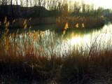 dark gold  # 2 by digit_elie, Photography->Shorelines gallery