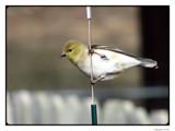 Bird On A Wire by Hottrockin, Photography->Birds gallery