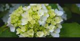 Fresh by nigel_inglis, Photography->Flowers gallery