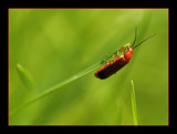 orange bug by JQ, photography->insects/spiders gallery