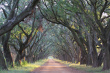 Evening Light on Live Oak Allee' by Vivianne, Photography->Landscape gallery