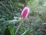 Purple Summer Flower by katsmeoww, Photography->Flowers gallery