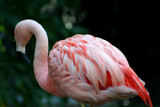 Pink Feathers by MTlens, Photography->Birds gallery