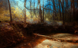 Fallen Timber by casechaser, photography->manipulation gallery