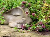 Easter Bunny Sleeping by CDHale, photography->sculpture gallery
