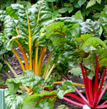 Eat Your Greens by braces, Photography->Gardens gallery