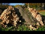 Shroom mountain by Paul_Gerritsen, photography->mushrooms gallery