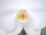 White Orchid by yellowdog07, Photography->Flowers gallery