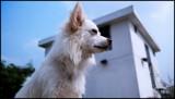 Jimbo by Talisman, photography->pets gallery