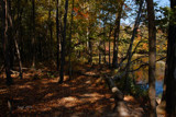 Potato Creek State Park 10/20/215 by tigger3, photography->nature gallery