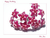 Happy Birthday Toto_San by dmk, Photography->Flowers gallery