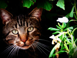 TJ the Cat by kayrulz7, photography->pets gallery